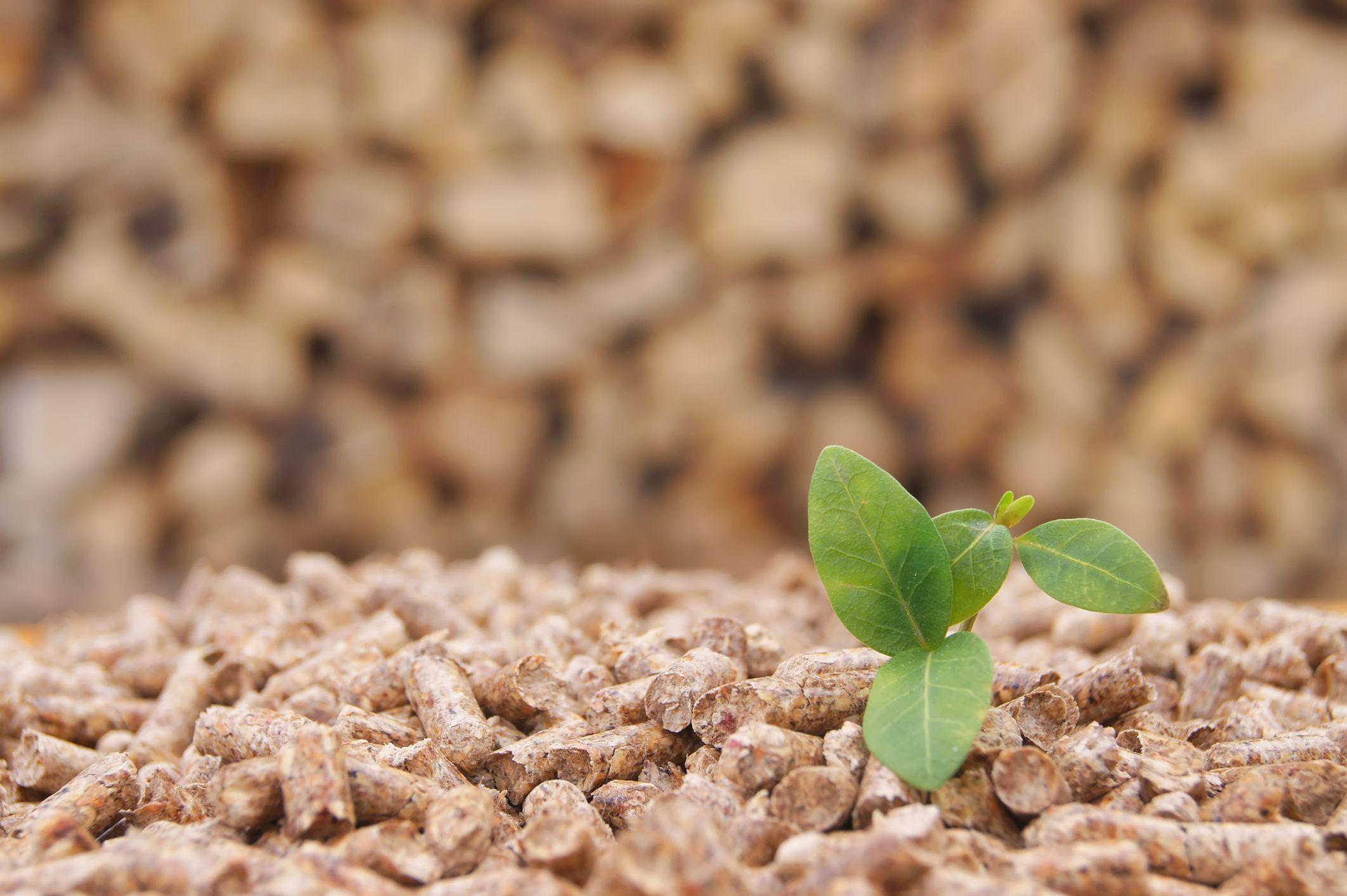 Proprietà Cenere Di Legna stufe a legna, stufe a pellet e inserti: la seconda vita